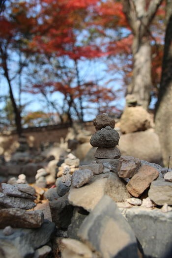 Stacked stone pagoda built by visitors and red maples as background in autumn at Bulguksa Temple, Gyeongju, South Korea Autumn Bulguksa Temple Red Maplesleavs South Korea Beauty In Nature Branch Close-up Day Nature No People Outdoors Sculpture Sky Statue Stone Sun Sunlight And Shadow Tranquility Tree