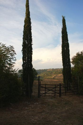 Beauty In Nature Day Fence Fences & Beyond Gateway Hills, Mountains, Sky, Clouds, Sun, River, Limpid, Blue, Earth Hillside Landscape Nature No People Outdoors Sky Tree Tuscany Tuscany Countryside Tuscany Italy Tuscany Landscape Zypressen Zypresses