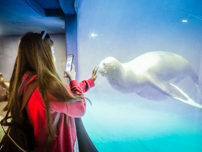 Side view of woman photographing seal in aquarium