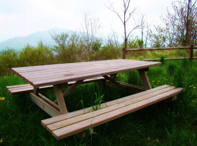 A nice lunch spot Bench Day Field Grass Green Color Nature No People Outdoors Seat Sky Tranquil Scene Tranquility Tree Wood