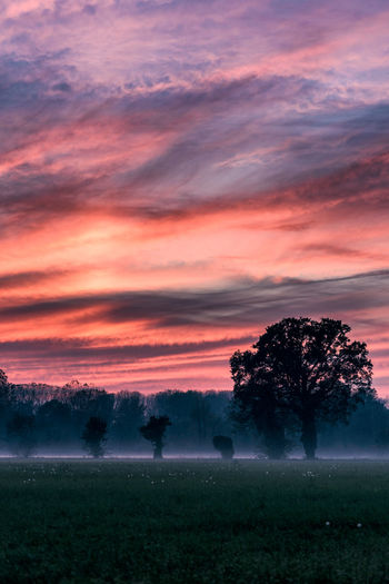 Foggy landscape at dusk. Pianura Padana, Italy. Tree Italy EyeEm Nature Lover No People Foggy EyeEmNewHere Nature Nature Photography Sunset Field Scenics Landscape Purple Rural Scene Cloud - Sky Outdoors Nature