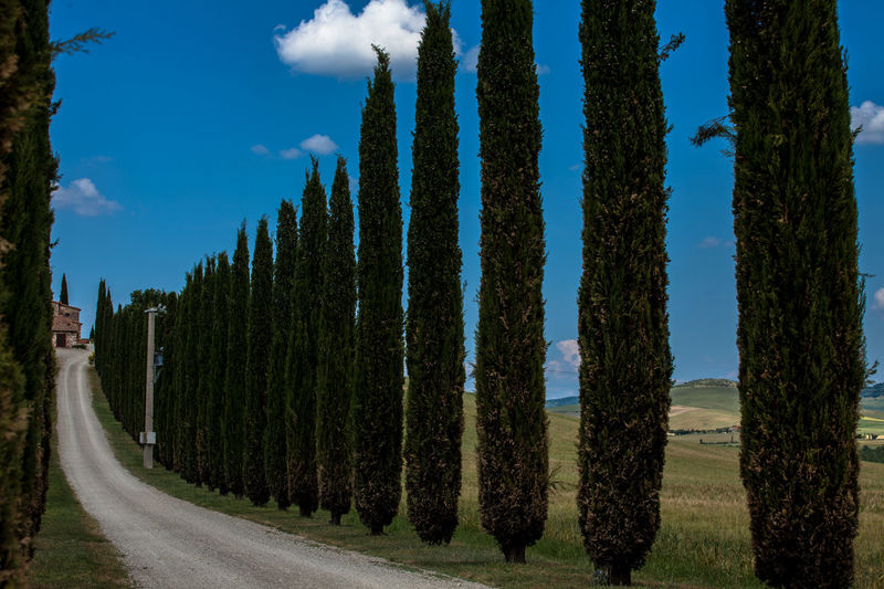 Val D'Orcia, Tuscany, Italy. Travelling through the countryside. Beauty In Nature Country Countryside Cypress Cypress Trees  Cypresshill Hills Hillside Italy Landscape Landscapes With WhiteWall Nature Panoramic Tranquil Scene Travel Travel Photography Traveling Travelphotography Tree Tuscany Tuscany Countryside Tuscany Italy Tuscanygram Val D'orcia