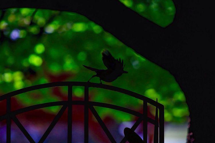 Michael Jackson Bird Walk Bird Bird Watching Moon Walk JGLowe