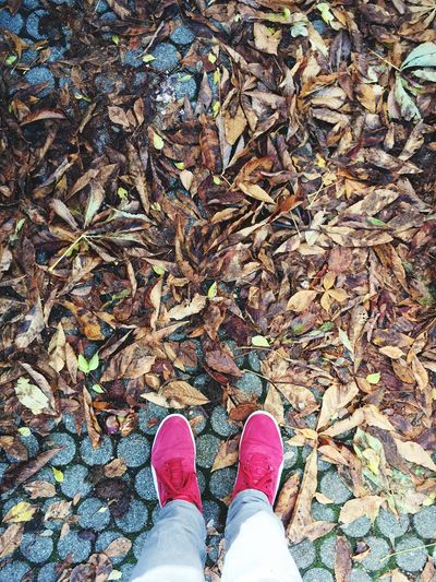 Low section of person standing by fallen dry leaves