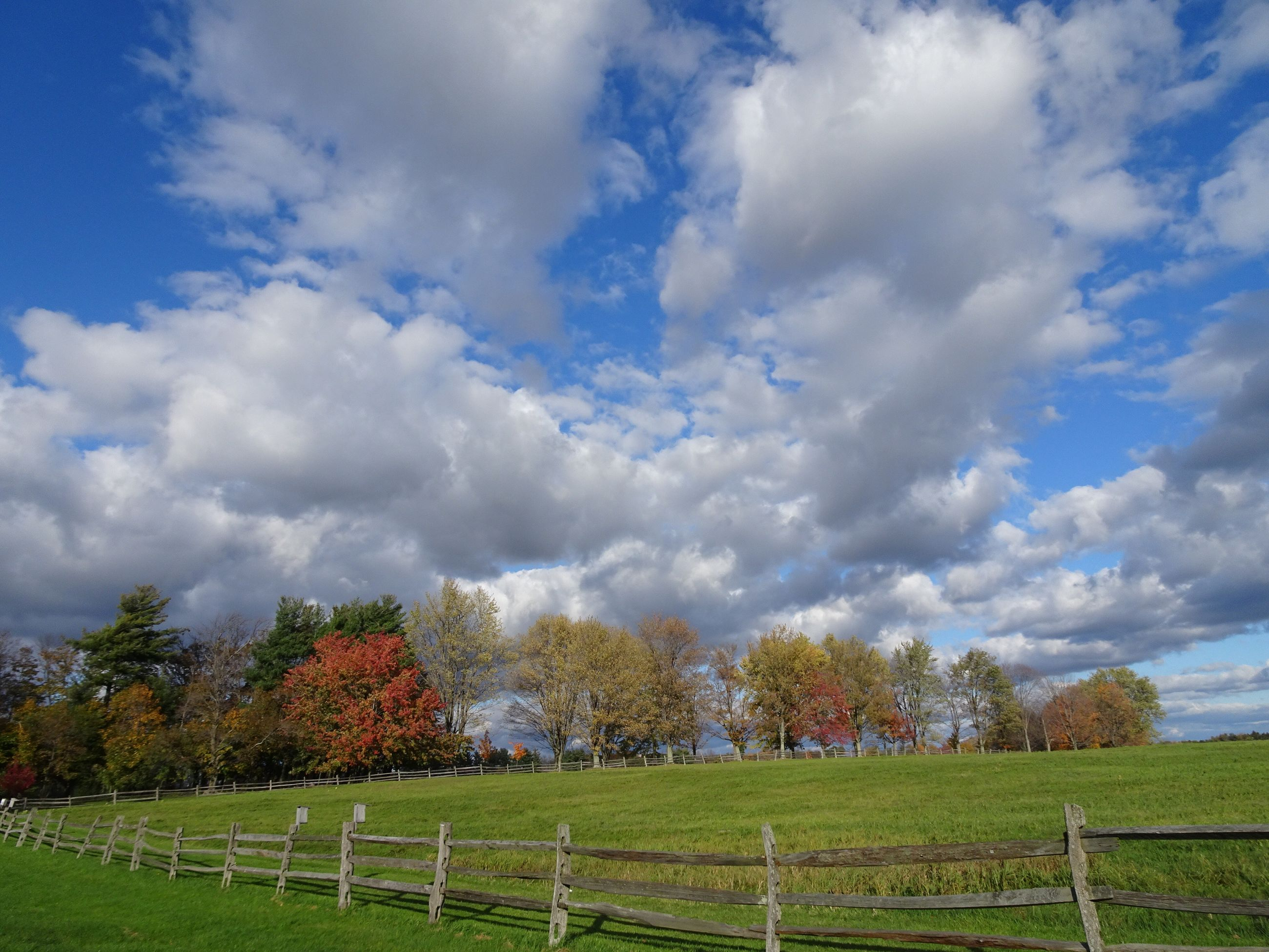 cloud - sky, sky, field, tree, tranquility, grass, day, nature, landscape, tranquil scene, scenics, beauty in nature, no people, outdoors, growth