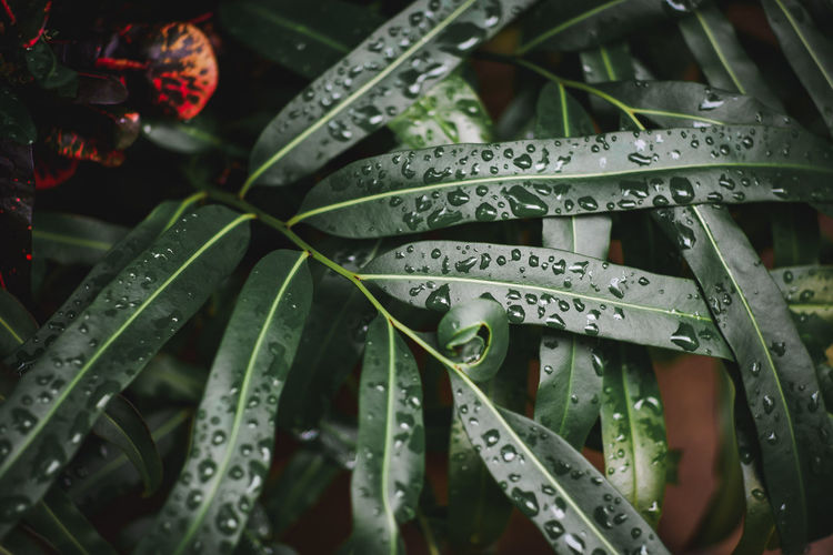 Full frame shot of wet plants
