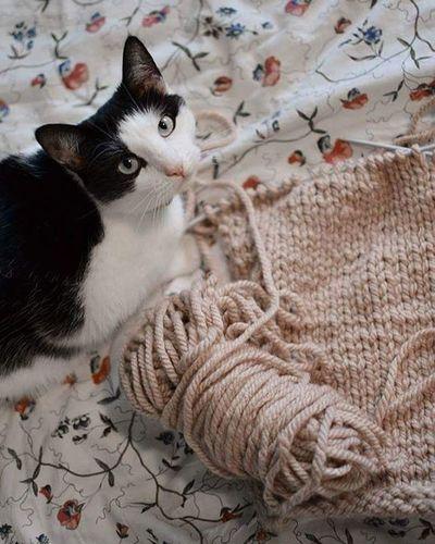 Bawimy się z Rywką Cat Knitting Knit Catagram Handmade VSCO Rywka Knitlove FreeTime Winter