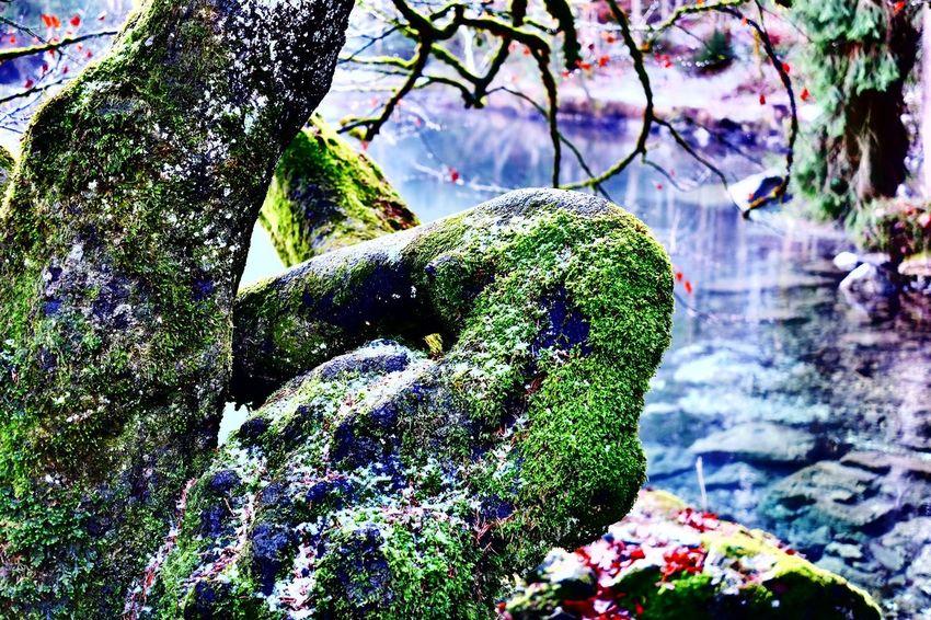 Trees Moss Lake Water Relaxing Badersee Meditative