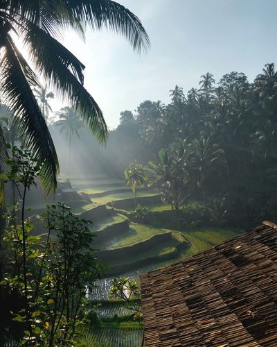 Early morning in Ubud