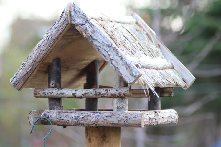 Bird house Bird Houses Birdhouse Focus On Foreground Wood - Material Day No People Built Structure Close-up Architecture Nature Outdoors Old Roof Plant Tree Pattern House Building Exterior Shape Building Wood