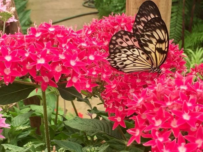 Close-up of butterfly on pink flowering plants