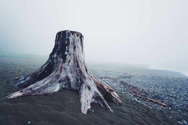 Tree stump on sandy field during foggy weather