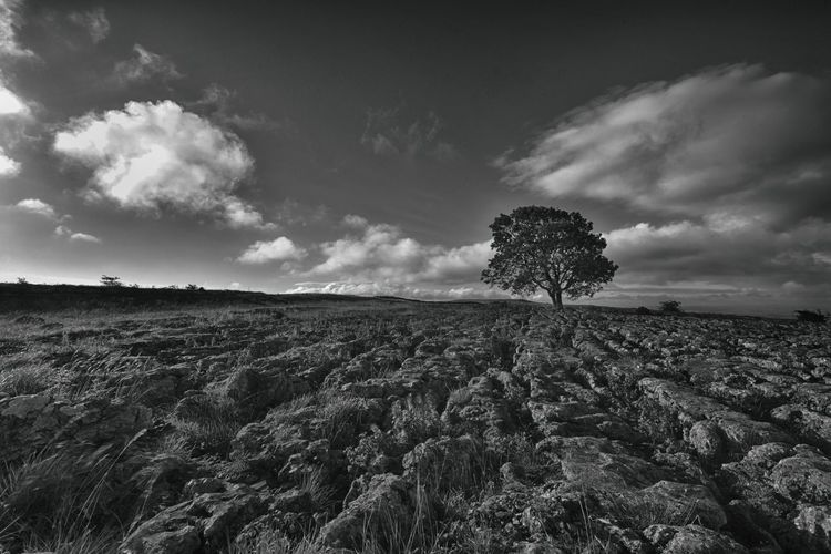 View Of Lone Tree On Landscape Against Clouds