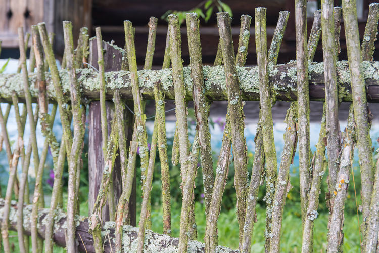 Fence Fence With Sticks Old Wood Stick Sticks Fence From An Old Tree Nature Hope Moss On The Fence Moss Village Countryside