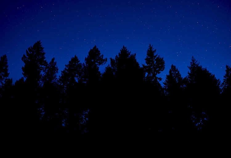 Trees and stars . Tree Night Plant Star - Space Sky Silhouette Scenics - Nature Astronomy Tranquil Scene Beauty In Nature Blue Space Tranquility Growth No People Nature Star Dark Low Angle View Forest Starscape Stars Tree Nightphotography Dusk Sky Dusk In The Country My Best Photo