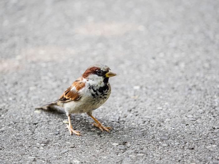 Close-up of bird eating