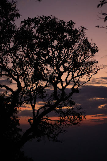 Sky Sunset Tree