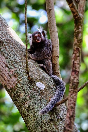 🐒 Monkeys Animal Monkey Animals In The Wild One Animal Tree Animal Themes Animal Wildlife Tree Trunk Mammal Close-up Portrait No People Nature Branch Climbing Looking At Camera Full Length Outdoors Sitting Day