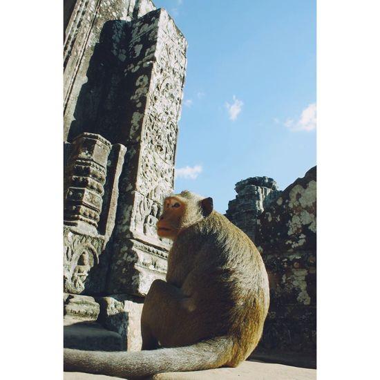 Monkey sitting outside bayon temple