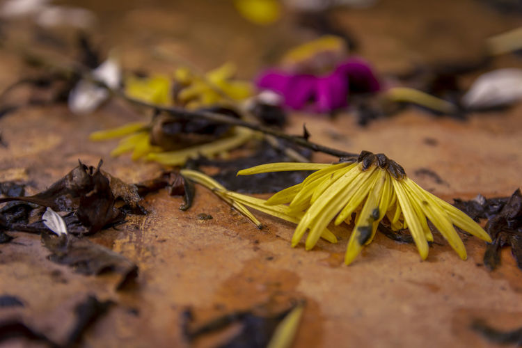 Close-up of yellow flowering plant on wood