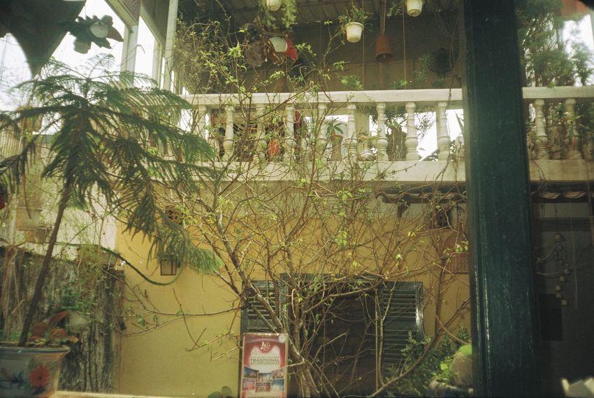 Asian  Autumn City Coffee Shop Couple Film Flower Hanoi Hoan Kiem Lake Indochina Indochine Long Bien Bridge Lotus Morning Motorbike Photography Sky TNBM Tonkinese Tree Vietnam Village Waterpark West Lake Ha Noi Yellow
