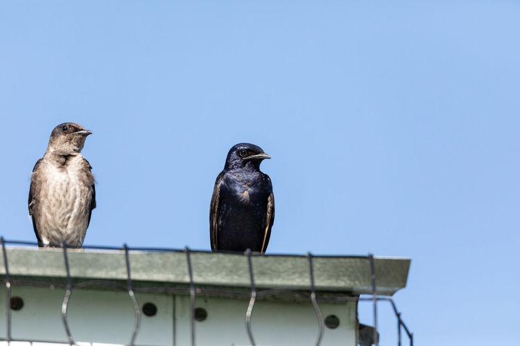 Birds perching on metal against sky