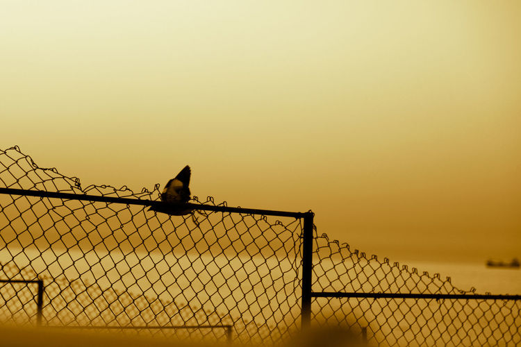 Silhouette birds perching on fence against orange sky