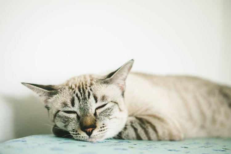 Close-up of a sleeping cat