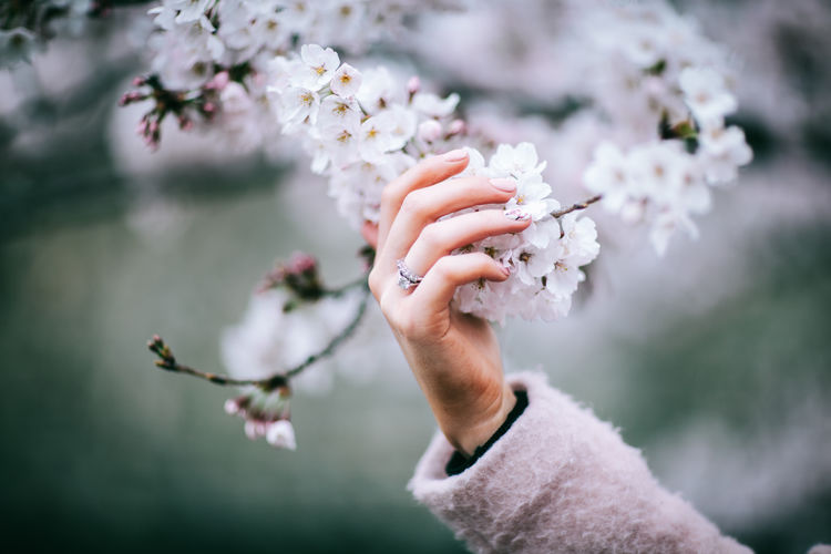 Blossom Branch Close-up Day Flower Flower Head Focus On Foreground Fragility Human Body Part Human Hand Japan Japan Photography Nature One Person Outdoors Petal Real People Springtime Tree White Color