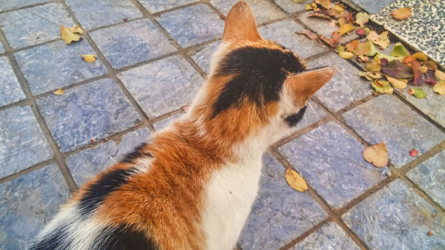 Animal Themes Day Domestic Animals Feline High Angle View Mammal No People One Animal Outdoors Pets