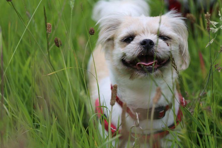 Close-up of dog on grassy field