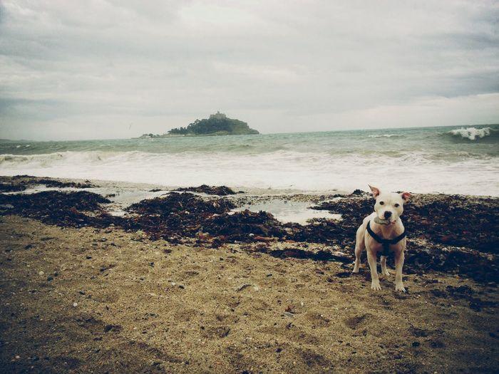 Dog Sea Waves