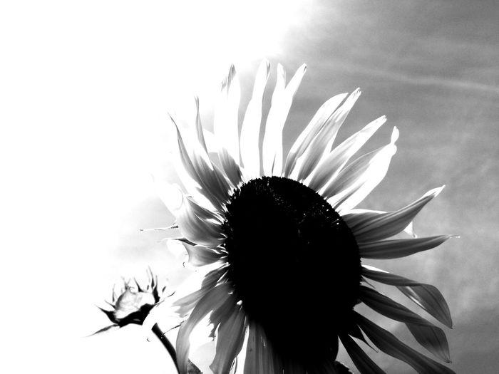 🌻 Flower