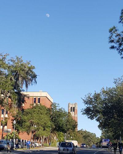 Mystudentlife Universityofflorida Gainesville