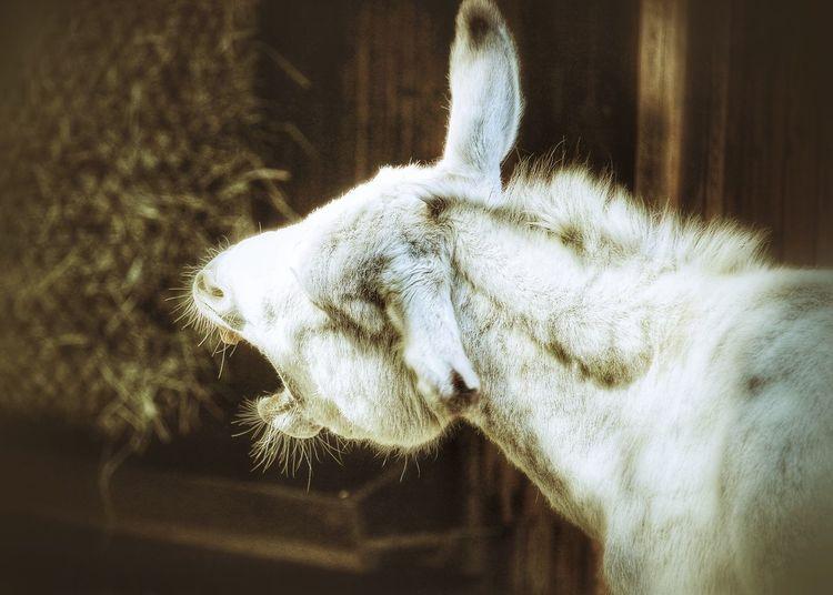 Maultier Animal Photography Tierfotografie Tiere Tier Animal Animals