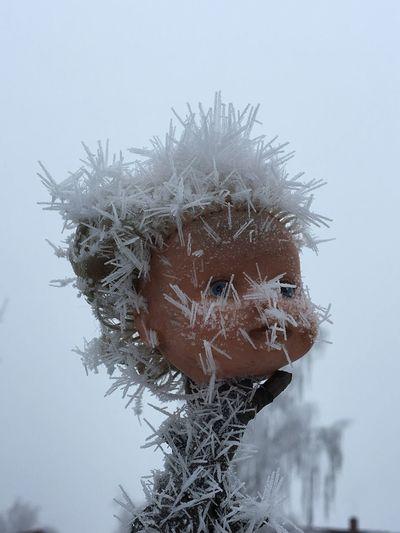 EyeEmNewHere Iced Dollhead  Putlitz Prignitz Brandenburg To Cold Outside Still Life Sky Plant Nature Day Frozen No People