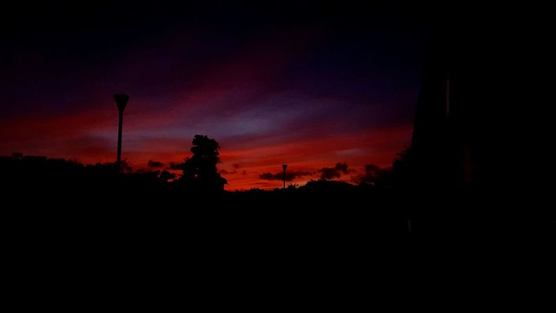 Nature Sky Beauty In Nature Tree Night Gosier Guadeloupe 971