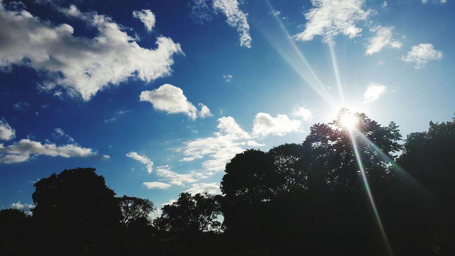 Low Angle View Sky Tree Sunlight Sun Outdoors Silhouette