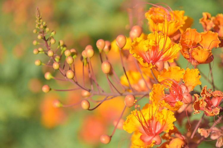 Scottsdale, AZ Desertflower Orange Natureionalgeographic] NatureBeauty In NatureeGrowthhPlanttFragilityyPetallOutdoorssYellowwFreshnesssNo PeopleeClose-uppFlower Headd Getty Images