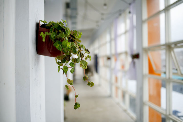 Close-up of potted plant against window of building