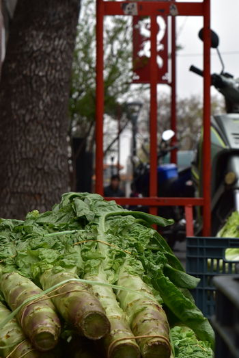 Close-up Green Color Salad Ingredients Salad Vegetable Salad Time VEGANLIFE Vegan Food Street Photography TakeoverContrast Streetphotography NikonD5500 Nikon TheWeekOnEyeEM Urbanphotography City Life Buenos Aires Delivery Foods Food Delivery Green Color Bokeh Photography Moto Delivery