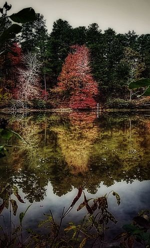 Water Reflection Lake Tree Outdoors Nature No People Beauty In NatureLandscape Tree Adventure Red Leaves Waterfront Vintage Photography Enjoying The View Mountain Stream, Mountain Creek Vintage Look Getting Inspired Hikingphotography Random Photography Walkin Around Beauty In Ordinary Things