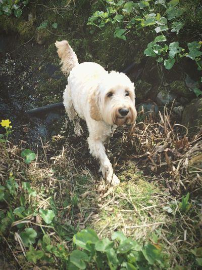 My dog dexter🐶❤️ First Eyeem Photo