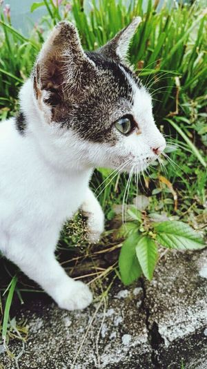One Animal Leaf Domestic Cat Plant Green Color Feline Stray Cat Close-up Nature Grass Outdoors Day Cute Cat 😻