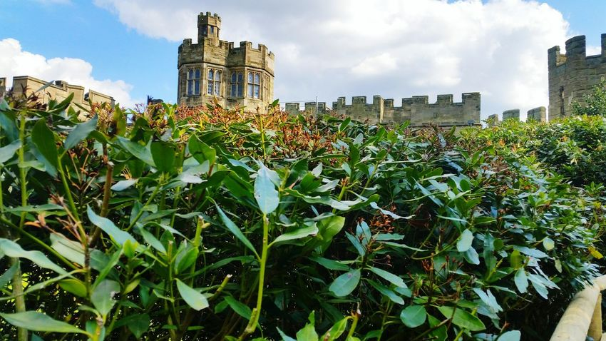 Peering over the top. What Lies Beyond... The Top  Peering Over Castle View  Garden Photography Check This Out Taking Photos Enjoying Life Focal Point Experimental Bushes Castle Keep Showcase April