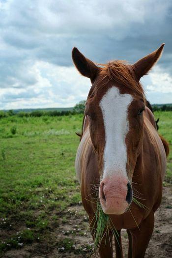 Horse On Grassy Field