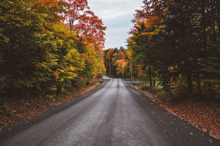 Autumn Beauty In Nature Change Day Diminishing Perspective Forest Landscape Leaf Nature No People Orange Color Outdoors Road Scenics Sky The Way Forward Tranquil Scene Tranquility Tree