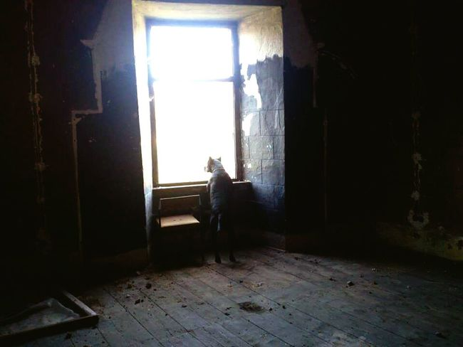 Lost in his humanity... Dog Animal Small Things Places Abandoned Places Abandoned Buildings Windows Castle Looking Out Of The Window Croatia Lost Dog Cellphone Photography Left Behind