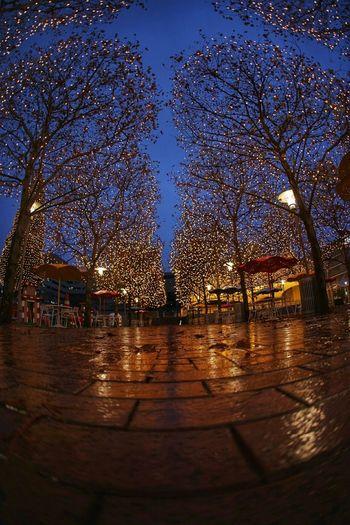 Nightphotography Colorful Festive Festivelights Cold Days Rain
