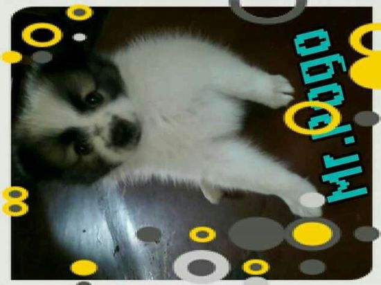 I Love You Pogo My Pet Dog Miss You Like Crazy R.I.P. My Friend Love ♥ U Will Remain Forever In My Heart Baby Pogo